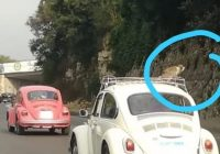 شي تك تك شي تيعا| قرد على سطح السيارة على طرقات لبنان